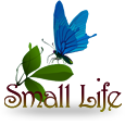 Small Life by B3W